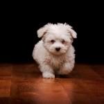 puppy leaving